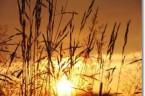 Myśl dnia Czyń każdego dnia postępy w miłości; jeżeli stoisz w miejscu, to się cofasz. bł. Karol de Foucauld ********** XIX NIEDZIELA ZWYKŁA, ROK B PIERWSZE CZYTANIE (1 Krl 19,4-8) […]
