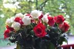 Kwiaty dla Inki w Parku Jordana w 69 rocznicę komunistycznego mordu Kraków, 28 sierpnia 2015 r. (zdjęcia – Józef Wieczorek)