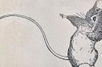 """W 1968 roku, amerykański naukowiec John Calhoun, przeprowadził doświadczenie, nazwane później """"mysią utopią"""", którego efekty, powtórzone kilkukrotnie, powinny były stać się przestrogą dla całej cywilizacji łacińskiej. Badacz umieścił cztery pary […]"""