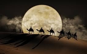 6 wielbłądów