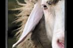 Dziś Ewangelia Jana o Dobrym Pasterzu ma bardziej niż przeciętny wydźwięk. Założenie jest jasne, dobry pasterz oddaje życie swoje za owce, nie tylko że w takim stopniu jak Najlepszy Pasterz […]