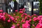 https://wkrakowie2015.wordpress.com/2015/07/04/zolnierze-kiedys-wykleci-dzis-w-kwiatach/ Żołnierze kiedyś Wyklęci, dziś w kwiatach Wieliczka, IPN, czerwiec/lipiec 2015 r. (zdjęcia i wideo – Józef Wieczorek)