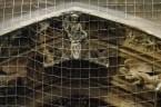 """""""I tak, wieczorem, 17 października 1917, w roku dwóchsetlecia powstania współczesnej masonerii, podczas sekretnego spotkania w celi Kolegium Braci Mniejszych Konwentualnych, przy ulicy San Teodoro w Rzymie, siedmiu młodych braci […]"""