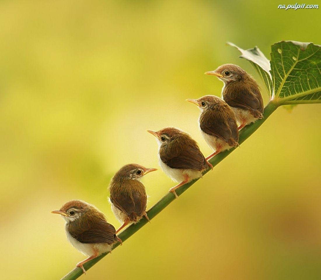 birds robin