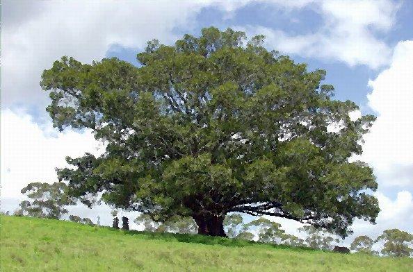 fig-tree-00