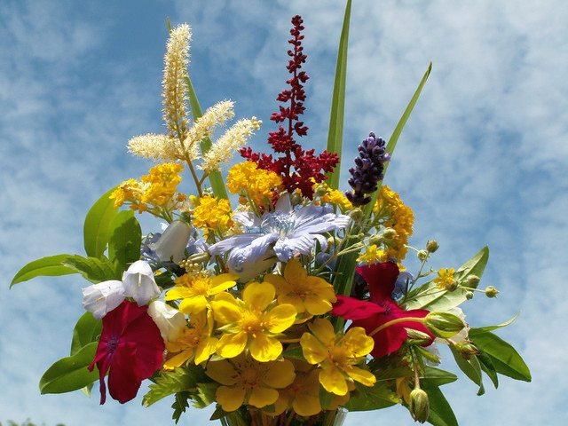 kwiaty-polne-dla-aniolow
