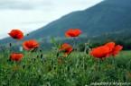 Zanim zakwitły maki na Monte Cassino..    W dniu 15 marca 2014r, w 70 rocznicę zbombardowania miasta Cassino, oraz opactwa benedyktynów, w lutym 1944r, Prezydent Włoch Giorgio […]