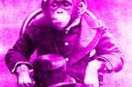 """Tak. Oto one: http://www.pis.org.pl/download.php?g=mmedia&f=program_pis_2014.pdf Kto mógł wymyśleć, że jednym z trzech podstawowych """"praw osoby ludzkiej"""" jest prawo do równości? Mason? Lewak?"""