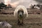 Każdy katolik zna przypowieść o dobrym pasterzu, który zostawia dziewięćdziesiąt dziewięć owiec i rusza na poszukiwanie zaginionej jednej owcy…Pan Jezus w ten sposób drastycznie wyraził się o swojej miłości do […]